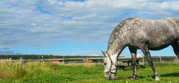 How to Achieve Your Equestrian Goals