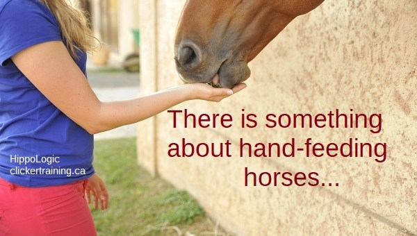 Common Fears About Hand-Feeding Horses