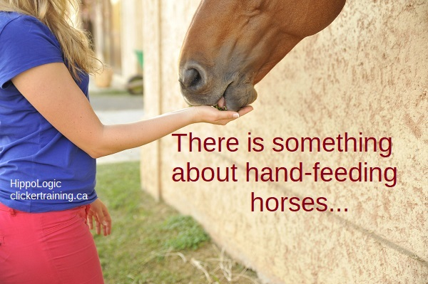 handfeeding-horses_hippologic_tablemannersforhorses