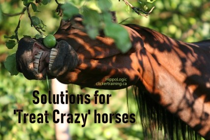 solutions for treat crazy mugging horse with clicker training