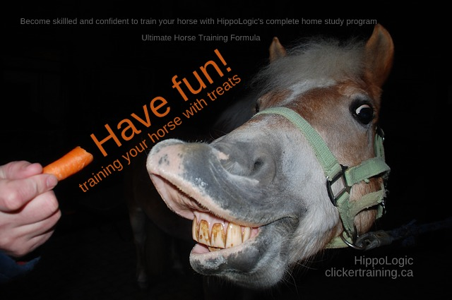 ultimate horse training formula_hippologic clickertraining