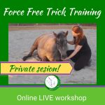 Private workshop on Zoom that teaches you all ins and out of teaching your hors to lie down with clicker training