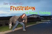 Frustration_in_training_horse_hippologic.JPG