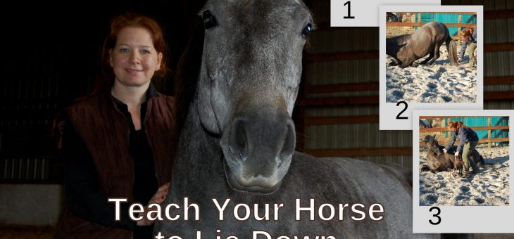 How to Teach your Horse to Lie Down