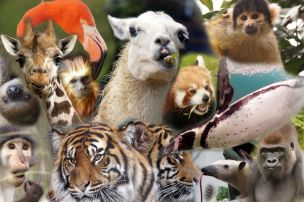 13 Zoo animals