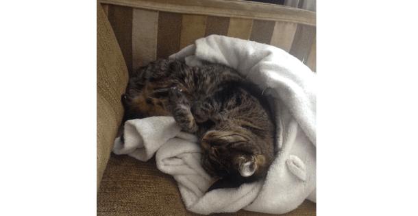 Cat: Not an Insomniac