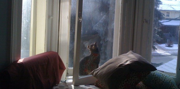 cat contemplating window