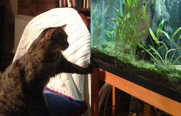 cat fish tank
