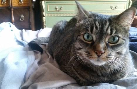 cat phd