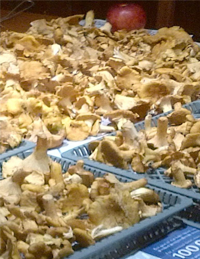 MT#980 Mushrooms on the Table: Chanterelles