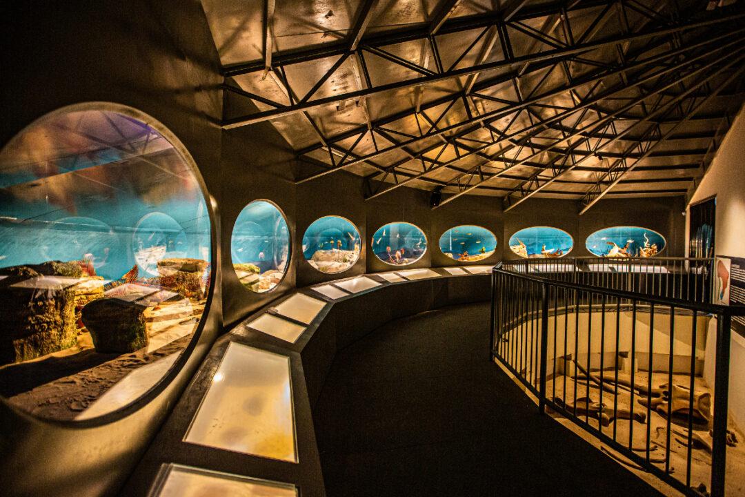 Maior Museu de História Natural da América Latina é inaugurado em Itatiba