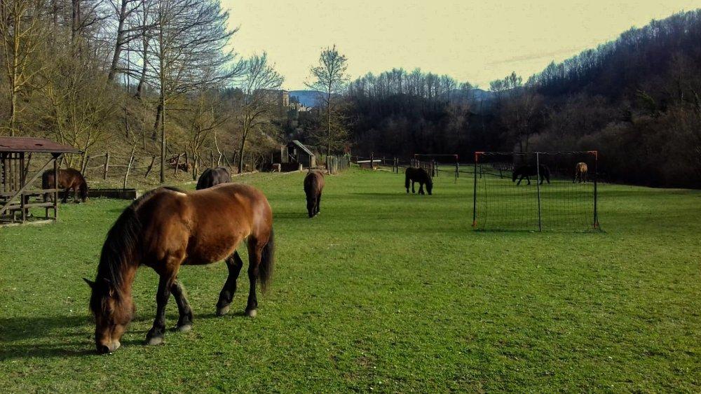 Cavalli sparsi nel parco dell'agriturismo Le Carovane in provincia di Parma