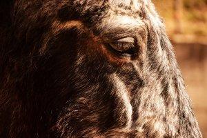 Il cavallo più anziano del maneggio Le Carovane