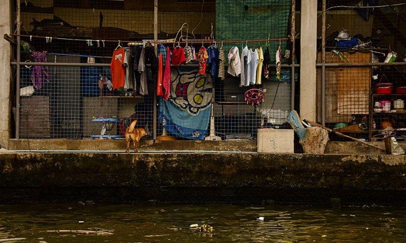 Un cane di fronte ad una baracca del canale di Thonburi a Bangkok