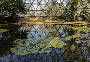 Brisbane Botanic Gardens Interno della Cupola Tropicale