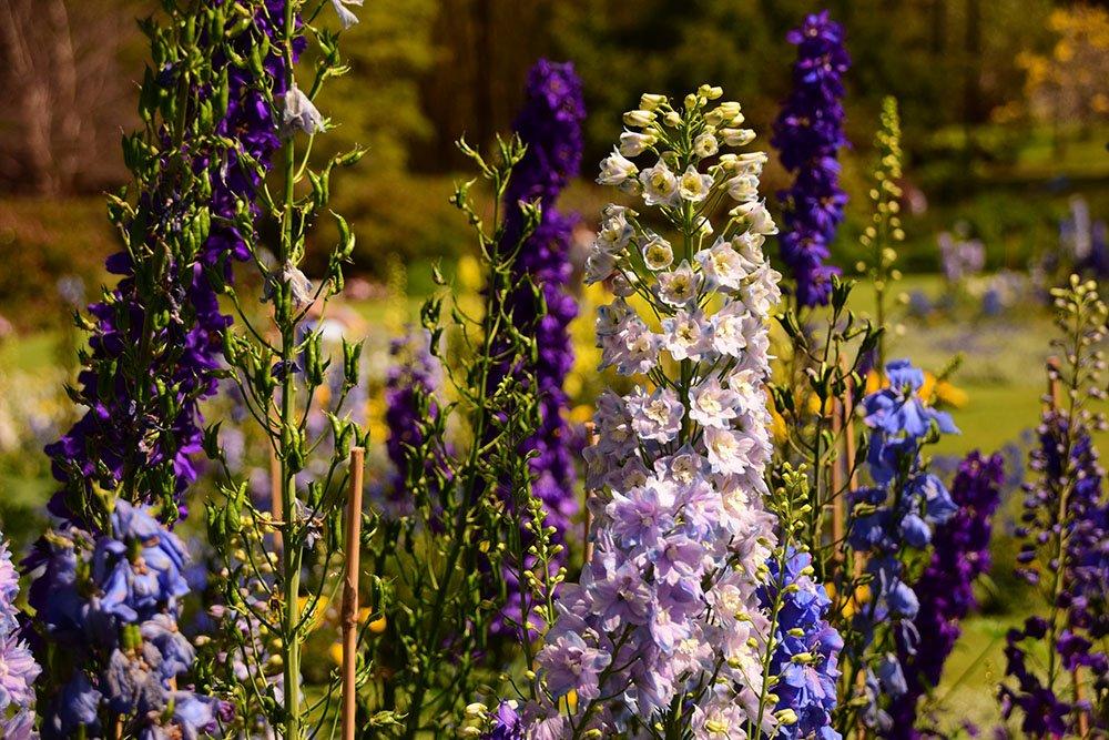 I Brisbane City Botanic Gardens nel pieno della stagione delle fioriture