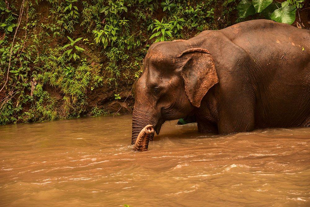 Mondulkiri Cambogia Elefanti