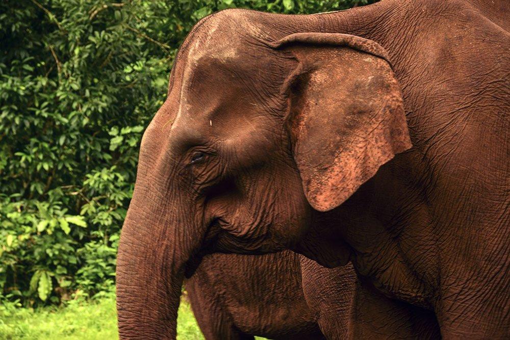 In Cambogia abbiamo visitato il santuario degli elefanti nel Mondulkiri