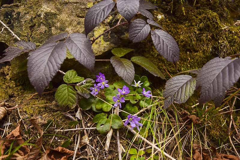 La natura incontaminata della Val Brembana riaffiora in primavera