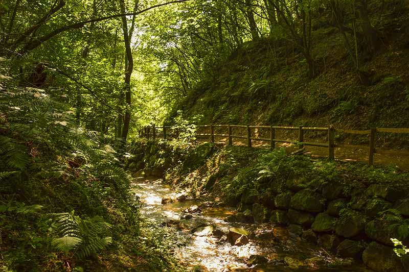 Levico: Il sentiero si inoltra fra boschi e piccoli corsi d'acqua