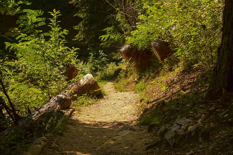Lago di Levico: Un tratto del sentiero
