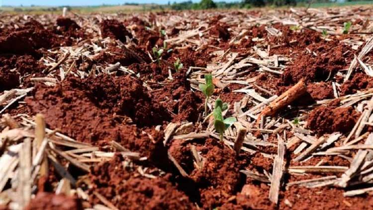 Plantio é intensificado e inicia germinação da soja no Rio Grande do Sul