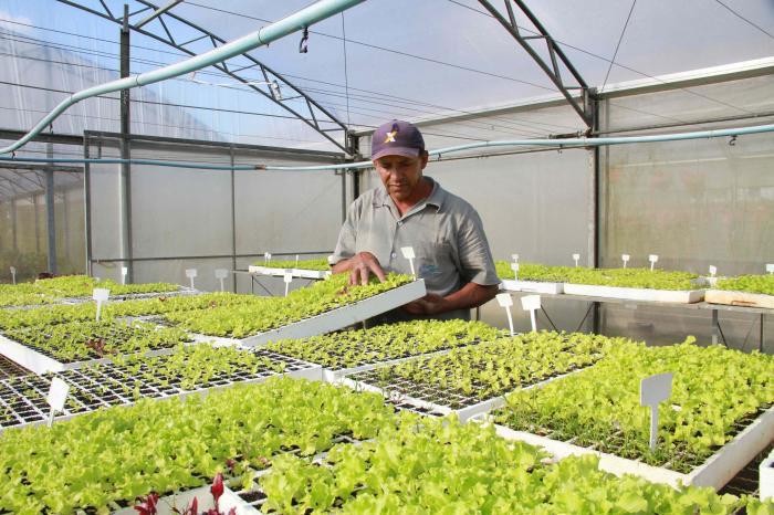Dia de campo de diversificação na agricultura familiar