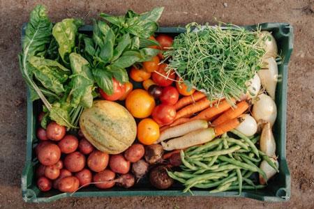 Uergs em Tapes prepara atividades de promoção do alimento orgânico