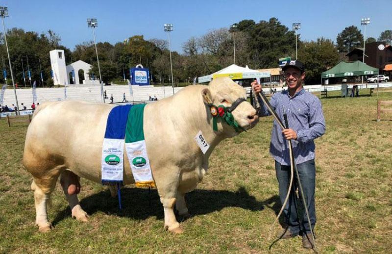Charolês tem campeões de Arambaré e Camaquã na Expointer