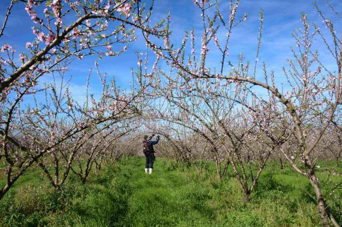 Boletim dá orientações para culturas durante a primavera