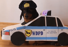 Doggy 'Car Chase'