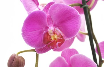 Caring for your Orchids with Lifestyle Home Garden