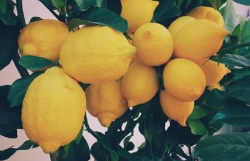 Caring for & Growing Citrus with Lifestyle Home Garden