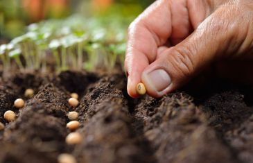 What is Sowing and how to do it