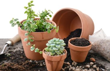 Potting Plants with Lifestyle Home Garden