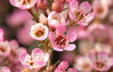 Growing & Caring for Fynbos with Lifestyle Home Garden