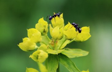 Dealing with Ants around the Home & Garden