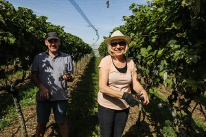 Jan and Tom helping with the 2018 grape harvest