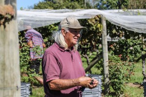 Many helpers at the 2018 grape harvest