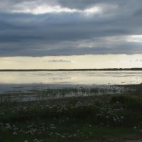 Where to Watch Birds - Tacumshin Lake