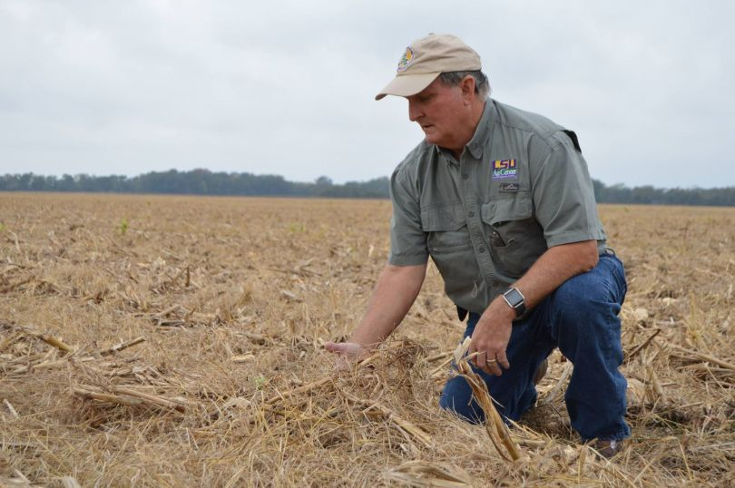By embracing sustainability, Louisiana farmers make their farms more efficient