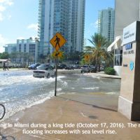 Two Ways to Adapt to Sea-Level Rise