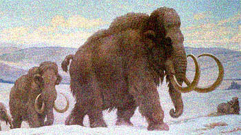 The last wooly mammoths died about 4500 years ago.