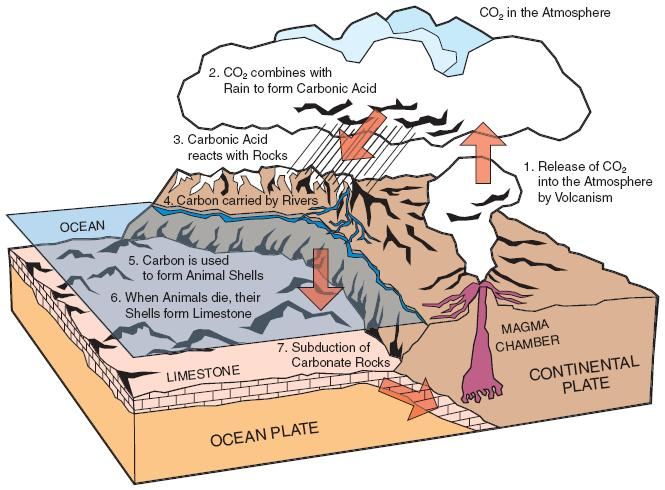 Fig. 3: The 'calcium carbonate' part of the carbon cycle. When marine animals including corals die, their skeletons and shells are buried and compressed. Some ultimately become the metamorphic rock limestone. This is moved deep underground (subducted) where tectonic plates grind against one another. Eventually, it becomes the main source of CO2 erupted by volcanoes. This mixes with rain to become slightly acidic, which in turn weathers rocks and carries carbon to the ocean where it is used by marine animals and corals, completing the cycle. Some 8% of carbon emissions is from the production of cement, which is made from limestone.(Image: University of Illinois)