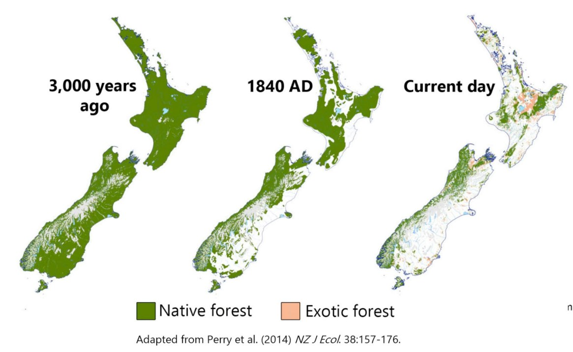 Fig. 1: Fig. 1: Between 1991-2018 some 40,800ha of native forests, scrub and shrubands were lost. Other ecosystems have suffered equally widespread losses, including indigenous grasslands, which lost 44,800 ha. (p47 DOC1) (Image: DOC/Christie)