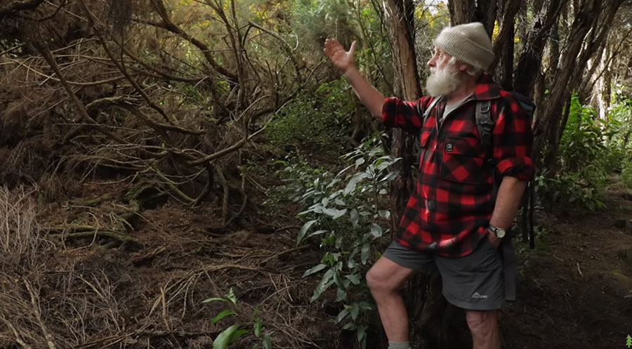 Fig. 3: Hugh Wilson points out how gorse (left) dies when shaded out by native forests. (Image: Happen Films)