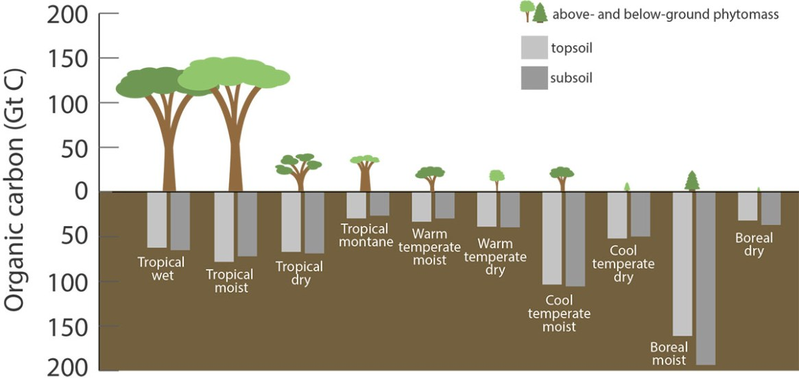 Fig. 2: Carbon stored in various types terrestrial ecosystems (Image: US Department of Agriculture, Forest Service)