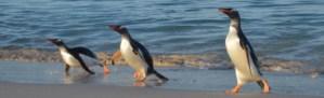 Falkland Islands 2016 exp
