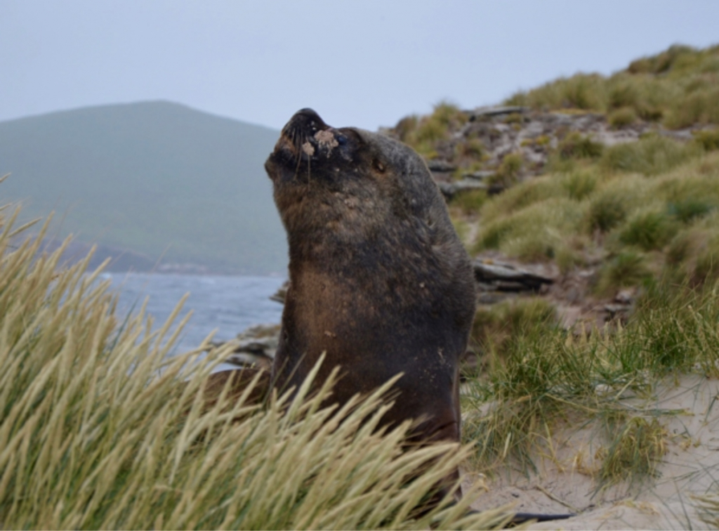 Falkland Islands 2016 exp