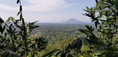 Photo of Field Site in Mount Singai.